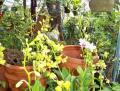Meta Vrhunc: Pomen kulturnih rastlin za današnji čas!