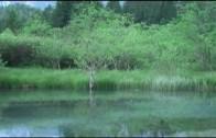 Energijski prepleti: Gozd Martuljek, 5. oddaja