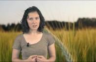 Okrepitev samooskrbe ali uničenje najboljših kmetijskih zemljišč?