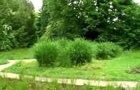 V osrčju Botaničnega vrta, 1.del