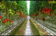 NA KRaTKO: Načini pridelave hrane