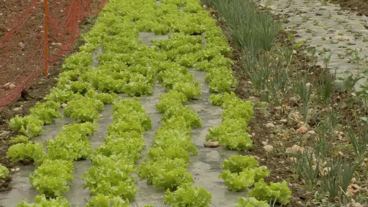 Rastoče grede: dokumentarna oddaja o lokalni hrani