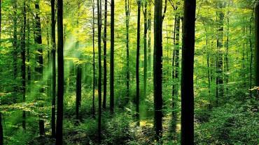 Slovenija znižuje CO2: dobre prakse 2015