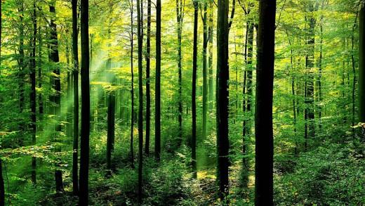 Slovenija znižuje CO2